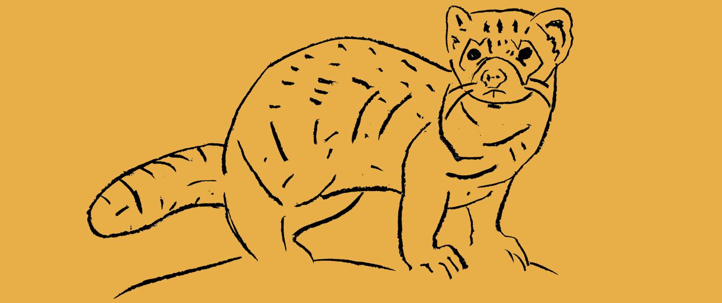 header_blackfooted-ferret_kawapomahkaiks_by-adrian-stimson