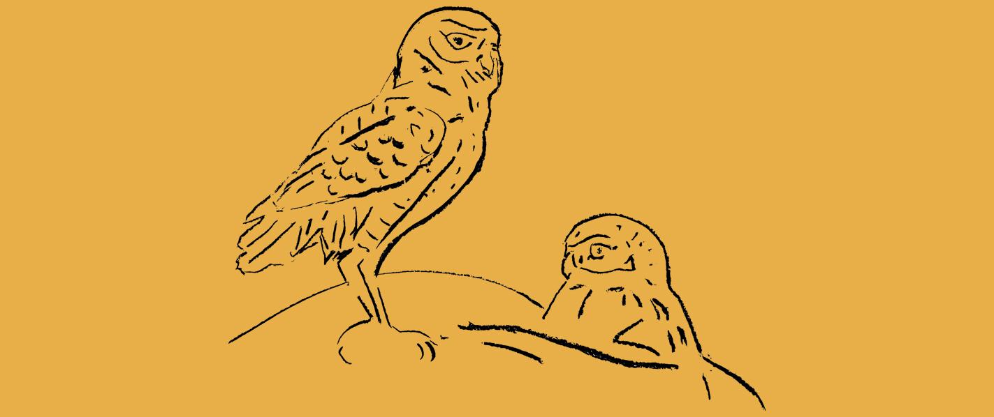 header_burrowing-owl_kawapomahkaiks_by-adrian-stimson