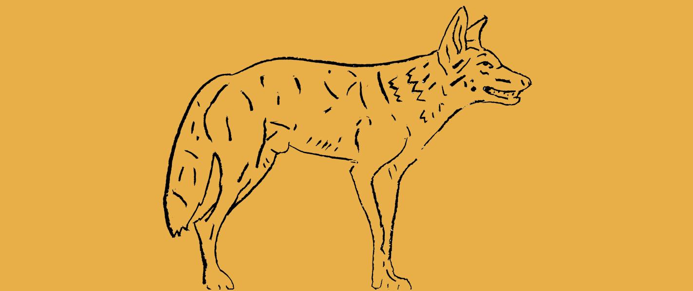 header_coyote_kawapomahkaiks_by-adrian-stimson